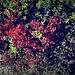 Herbst...unzweifelbar