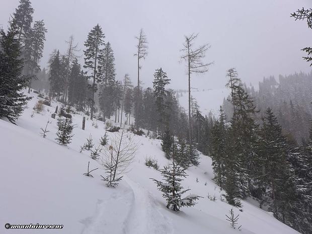 Ungewöhnliche, aber sehr gut angelegte Spur im Waldbereich
