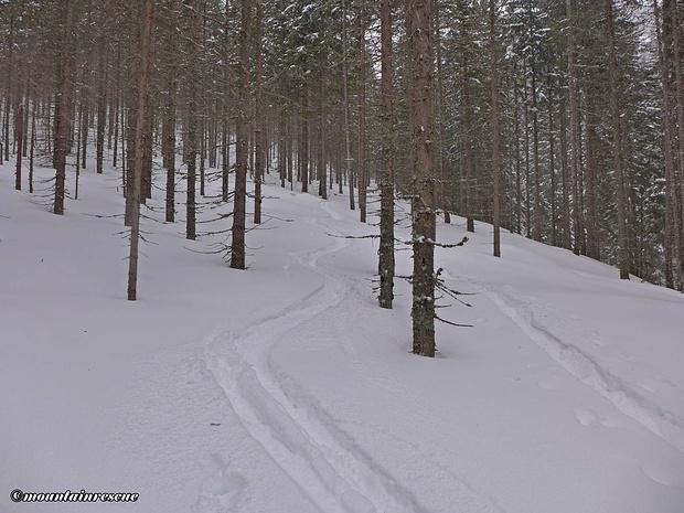 Stangenslalom im lichten Wald ☺