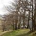 Bäume auf den Ober Scheidegg II