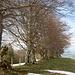 Bäume auf den Ober Scheidegg III