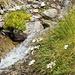 Alpen-Mauerpfeffer und -Massliebchen beim Roten Gufer
