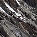 Bei einem Schäferstündchen überrascht: Steinbockpaar in der Lauteraarhorn-S-Flanke