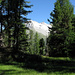 Der Aletschwald, hier eine saftige Hochmoorwiese