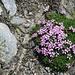 und immer wieder - auch im zahlreichen Gestein - Blumentupfer