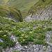 Schafhaltung im Gebirge ist eine ökologische Katastrophe. <br />Das ist der Ein-/Ausstieg der Risi von R. 1181 im Führer.