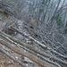 Il sentiero da Rovio: intemperie e boscaioli hanno fatto il loro lavoro