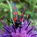 Immer wieder anzutreffen: Wie heisst dieses hübsche Insekt?