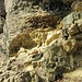 Nagelfuh auf Molasse am Steinbalmen