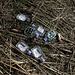 Sehr schön! Feiern in der Natur ja, Müll wegräumen nein!<br /><br />Bravi! Far festa nella natura sì, portare via i rifiuti no!