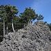 Kuzov - Freie Felskämme aus Tephrit bzw. Basalt ragen zwischen den Kiefern heraus.
