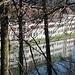 Kloster spiegelt sich im Rhein I