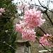 ... hübscher Blütenpracht ...
