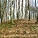 ... zur Burgstelle Nieder Maggenberg