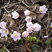 Kleeblüten