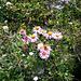 Fleur et papillon dans le Val Clavalité