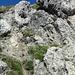 Die Schlüsselstelle des Aufstiegs ist diese Rinne. Ein Ier, aber erdig und geröllig und darum etwas eklig. Die Steilheit lässt sich auf so einem Foto natürlich nicht einfangen.