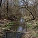 Grundwasser im Auenwald