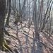 Luce nel bosco