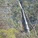 Sul sentiero Rovio-Melano a 10' da Rovio ecco la 2a Cascata del Sovaglia che ha invero un suo nome: Cascata del Botto