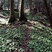 Im flachen, offenen Gelände tendieren wir nach rechts (Gehrichtung) und finden über dem Sarbentalbach den deutlich sichtbarten Trampelpfad.