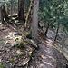 Auf einer Höhe von 670m ü. M. stösst man auf den Trampelpfad Ost (Hohenstein - Falletsche, siehe meine entsprechenden Berichte). Wir überqueren ihn und folgen dem Kamm der Rippe aufwärts.