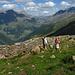 Davide e Donatella,sullo sfondo sullo passo di Verva,dal quale si scende nel bormiese,mentre a sinistra,l'imbocco per la val d'Avedo