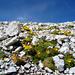 Etwas Blumiges inmitten der Felswüsten aus Dolomit