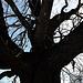 Baum mit Winterkrone