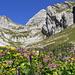 Das Jöchli taucht über farbenprächtigen Blumen auf