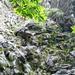 Aufstieg nach Cogliata - Eingang des Kamins
