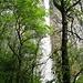 La cascade se laisse difficilement approcher; la végétation est dense