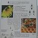 Infos über die Biene