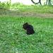 un simpatico scoiattolo all'hotel Rosegg