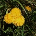 Sonnenwirbel