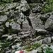 Sperone roccioso da superare aiutandosi con le mani tra: facili asperità rocciose. Come dimostra la foto ci sono anche i segnavia per agevolare l'elementare arrampicata.