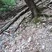 Cercare e seguire i primi tondini che iniziano un 50m sopra, andando drittti/dx