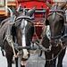 Lustige Pferde in Zermatt (1605m) - Ausgangspunkt für viele 4000er-Touren.