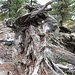Zirbenstumpf - Ein Vogel aus Holz sitzt obendrauf