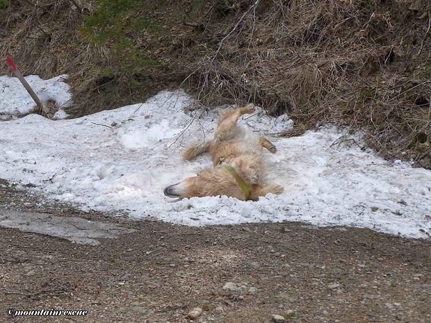 Der Frühling zieht ins Land und die Schneefelder werden immer kleiner...