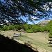 Alpe d'Orino