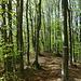 Nel bosco sul crinale