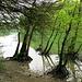 fast wie Mangroven