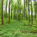 Noch mehr frisches Grün