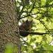 Eichhörnchen im Seetel