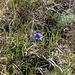 Un saluto finale Un fiore di montagna come augurio a tutte le mamme