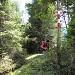Inizio del sentiero nel bosco