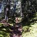 Bergan im Wald