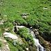 Munter plätschert der Neunalpbach talwärts