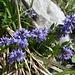 sehr klein die Blüten - doch insgesamt sehr kunstvoll